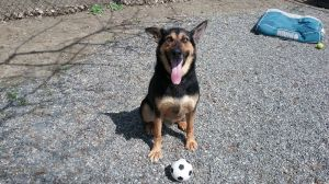 Birthdate 4152015 Breed One of a kind Our handsome boy Messi matches his soccer namesake in grac