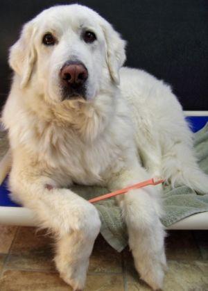 Dog For Adoption Sawyer Near Wyoming Mn Petfinder