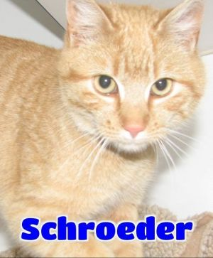 #4346 Schroeder -sponsored