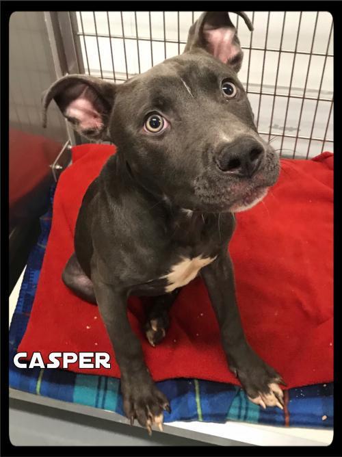 Casper - 638 / 2017 1