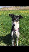 Greyhound Dog: Camille
