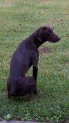 Hunting Dog Training Redding Ca