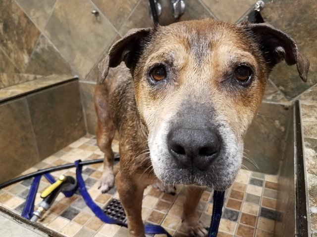 Emma - sweet & loving senior, an adopted Mixed Breed in Stamford, CT