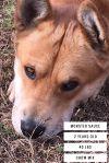 Chow Chow Dog: MONSTER SAUCE: A LOOKER