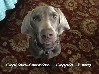 Captain America (Cappie)