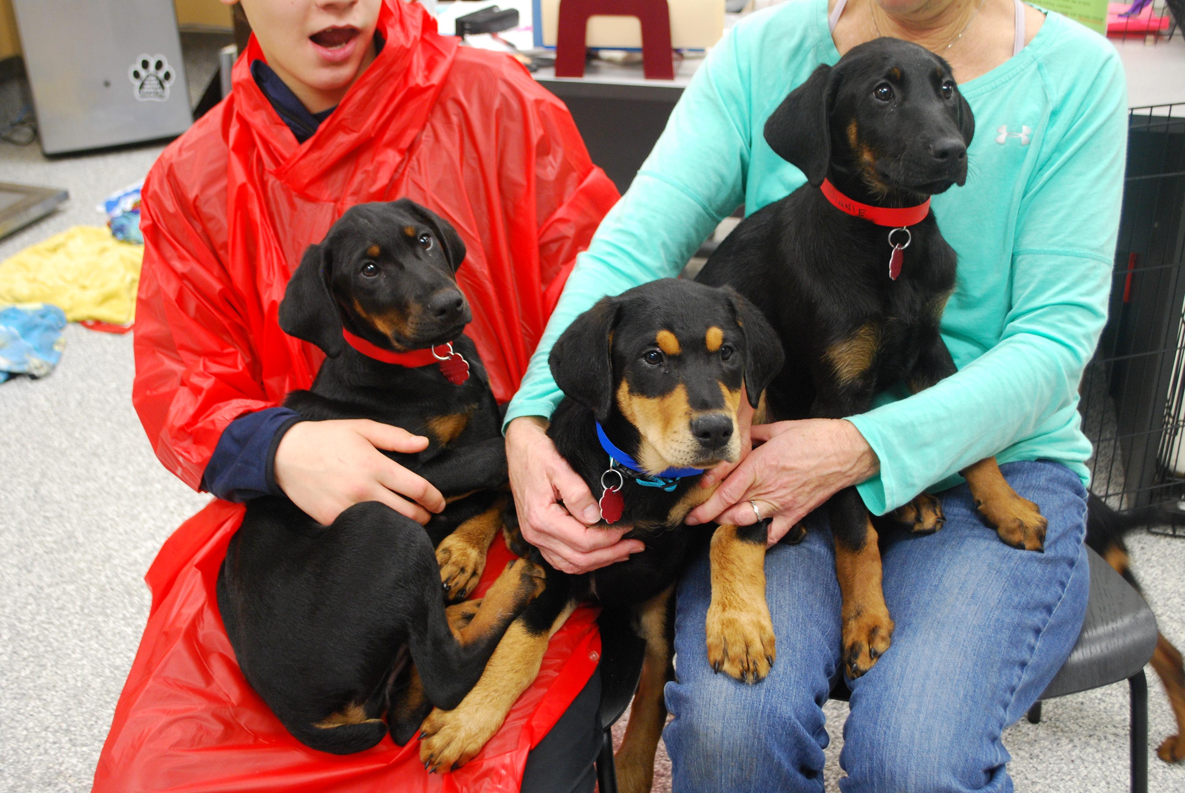 Doberman Puppies!