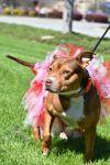 Hound Dog: Aspen