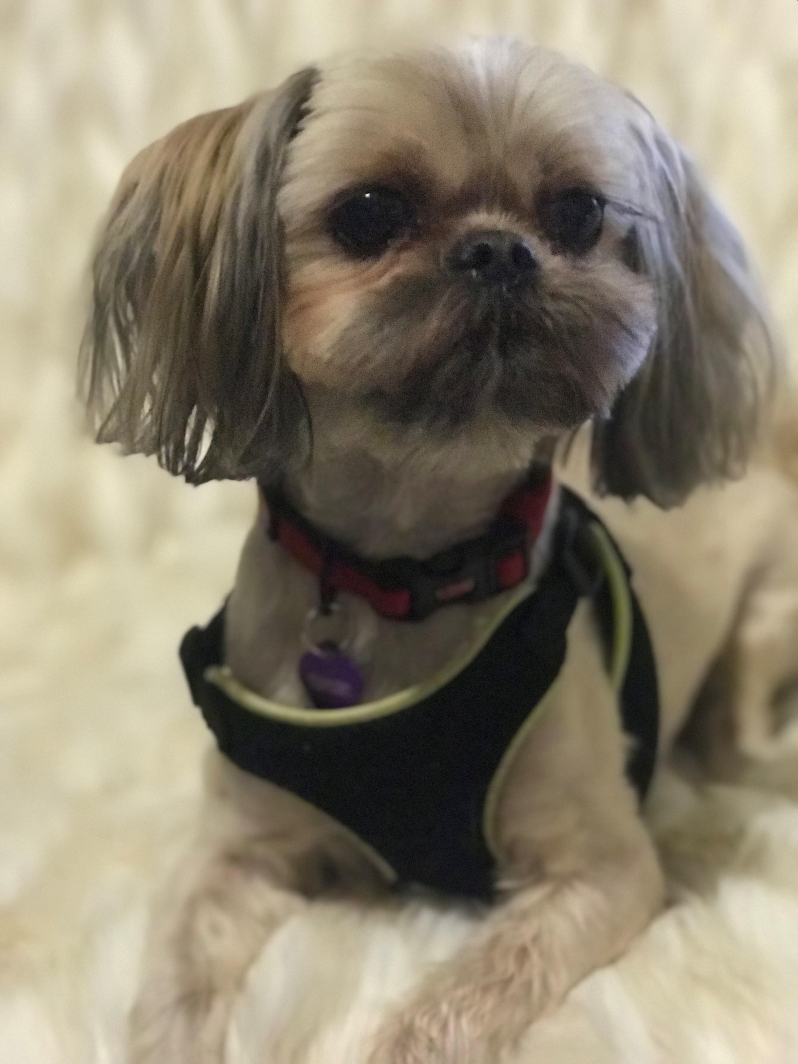 Dog For Adoption Bodhi Near Springfield Va Petfinder
