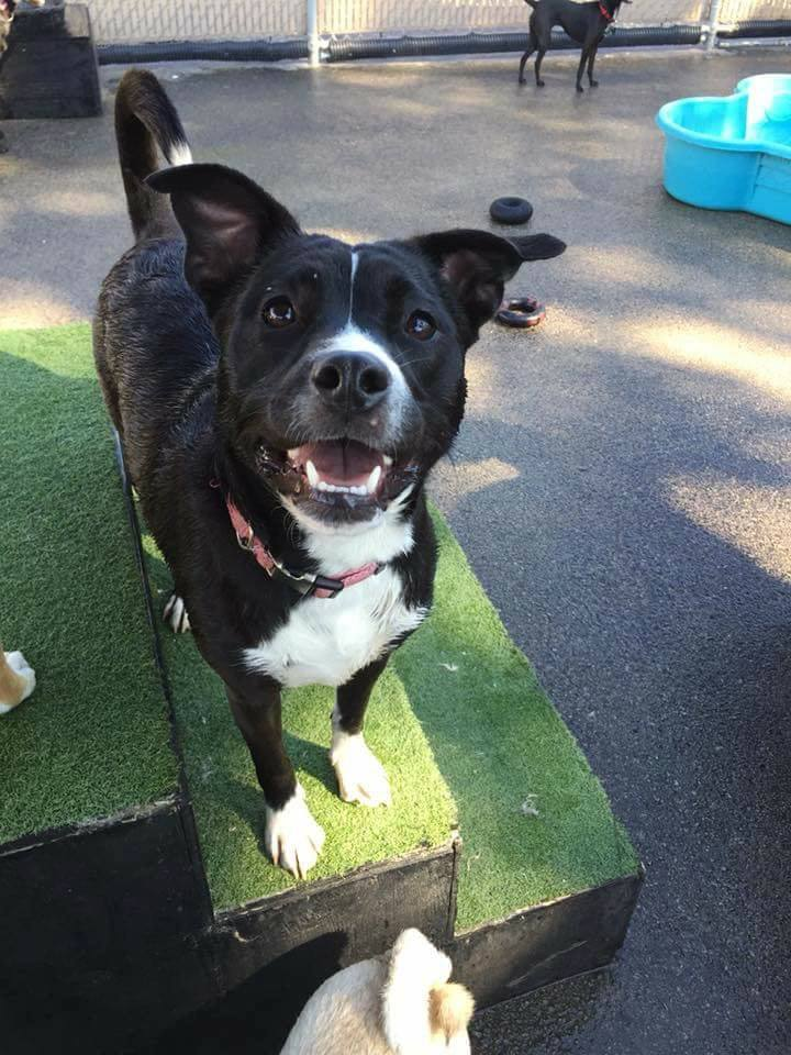 Dog for adoption - Ariel, a Border Collie Mix in Milwaukee