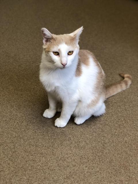 Daisy Mae! Colony Cat!