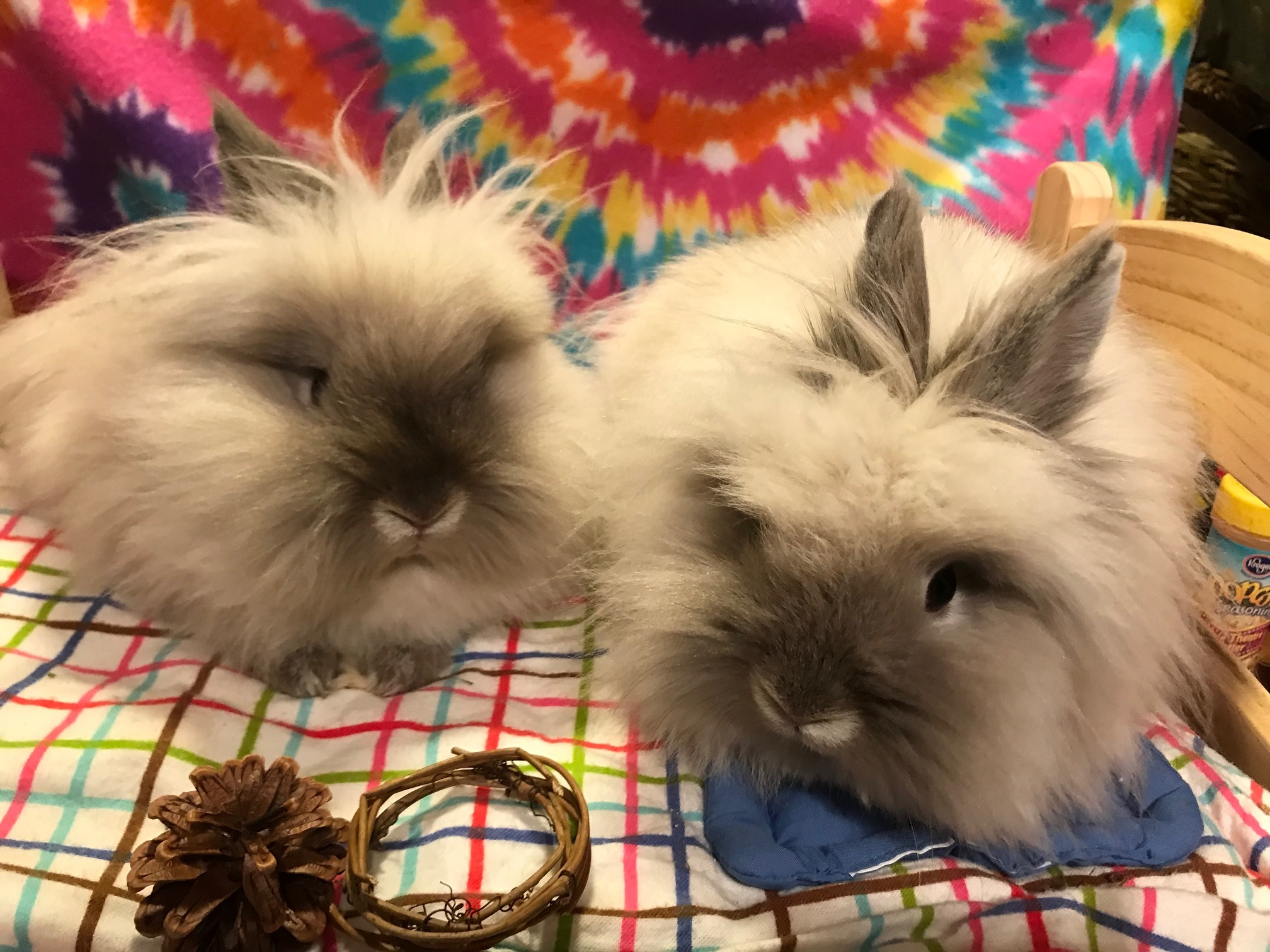 Juniper and Pickle (bonded pair)