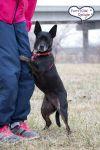 Adopt A Basenji Dog Breeds Petfinder