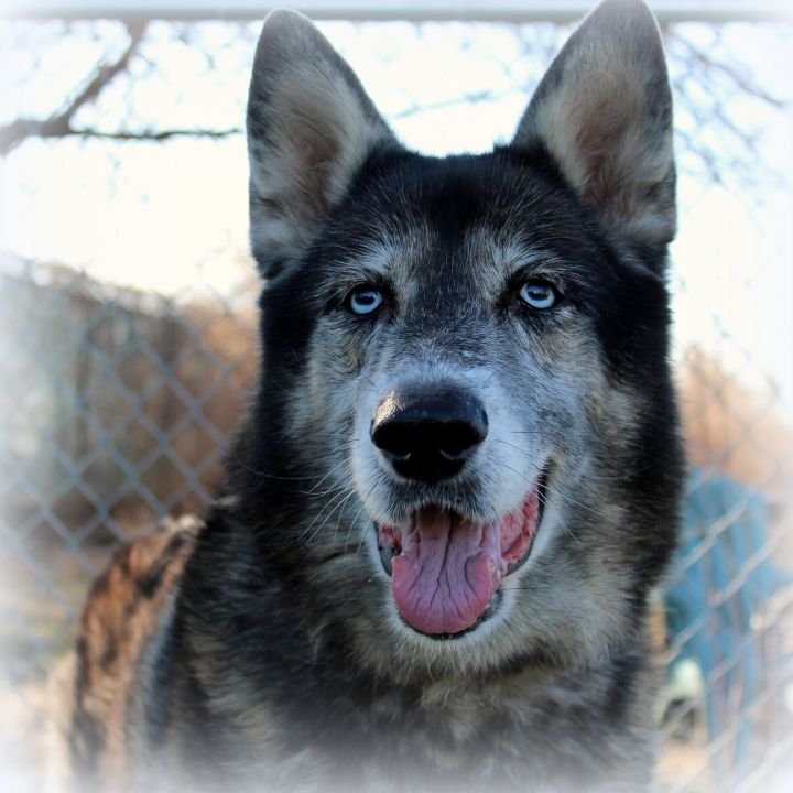 Fendi (Gentle & Loving Girl, Great with Kids & Dogs) - SAMMY'S HOPE 2