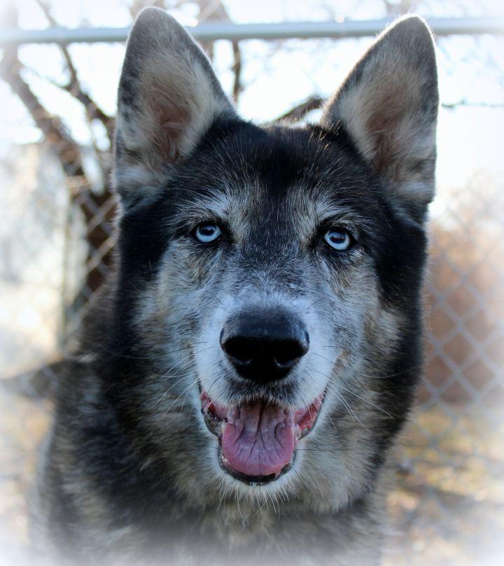 Fendi (Gentle & Loving Girl, Great with Kids & Dogs) - SAMMY'S HOPE 3