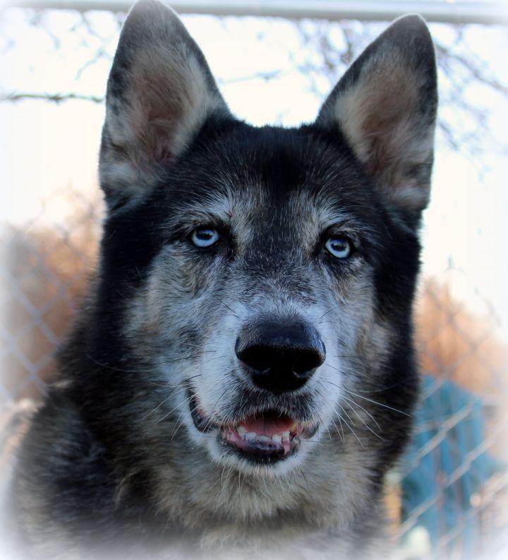 Fendi (Gentle & Loving Girl, Great with Kids & Dogs) - SAMMY'S HOPE 4