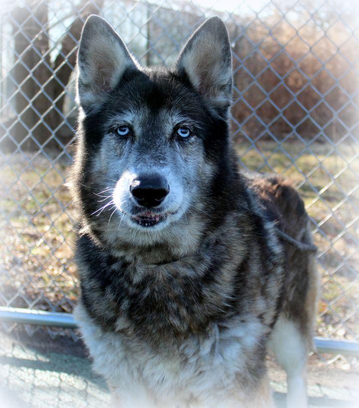 Fendi (Gentle & Loving Girl, Great with Kids & Dogs) - SAMMY'S HOPE 5