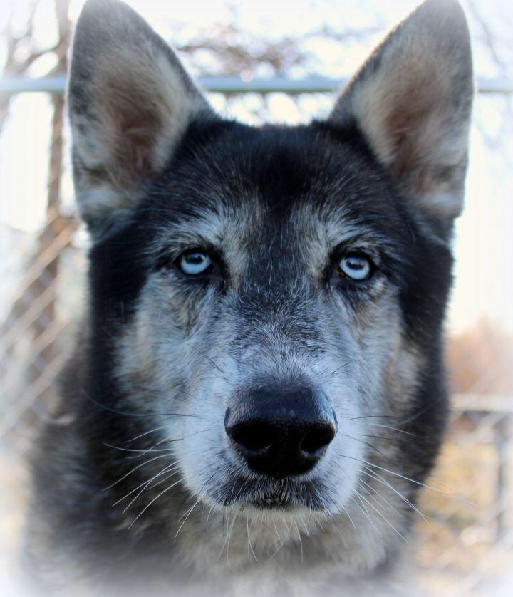 Fendi (Gentle & Loving Girl, Great with Kids & Dogs) - SAMMY'S HOPE 6