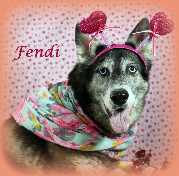 Fendi (Gentle & Loving Girl, Great with Kids & Dogs) - SAMMY'S HOPE 1