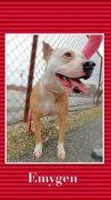 Bull Terrier Dog: Emygen