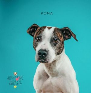 Kona was recently dumped with another dog at a shelter after living with one family for six years