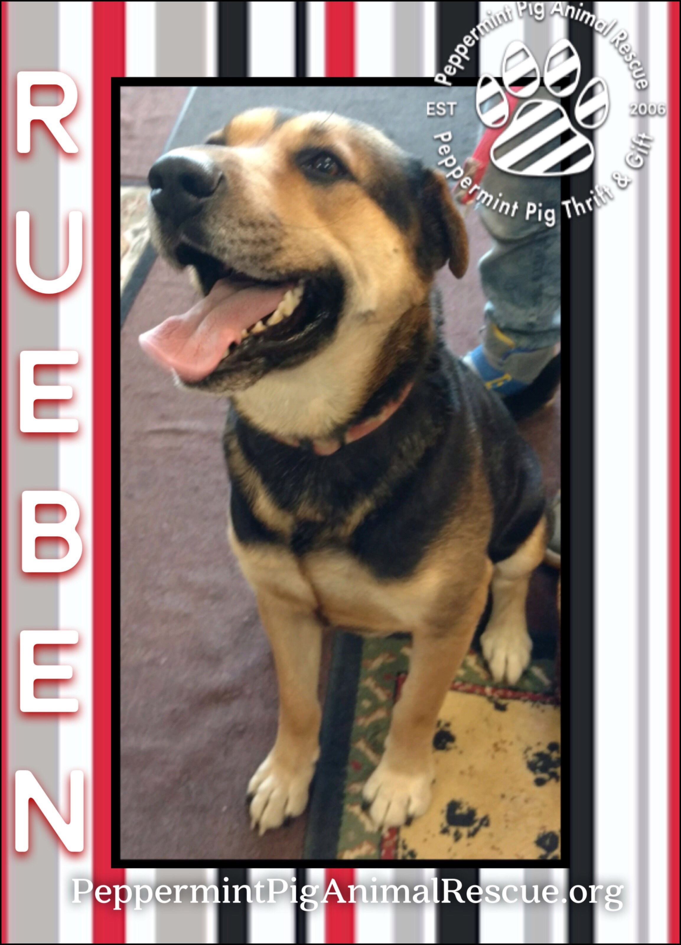 Rueben ADOPTION PENDING