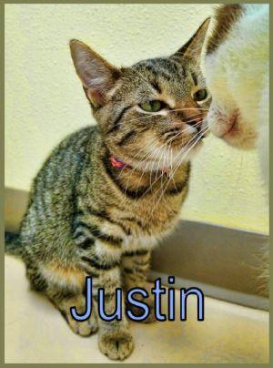 JustinNike