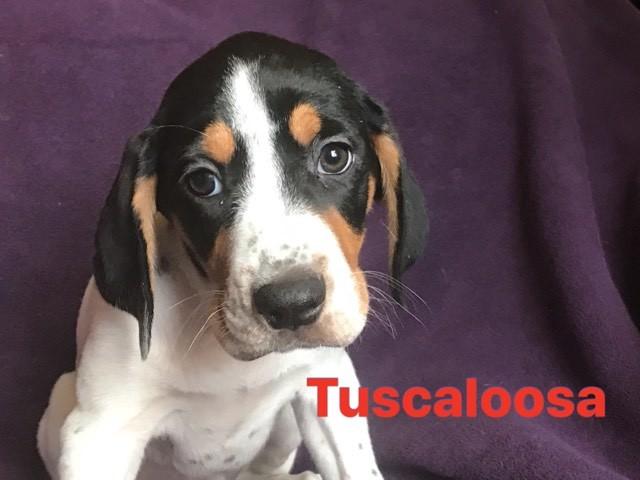 Tuscaloosa