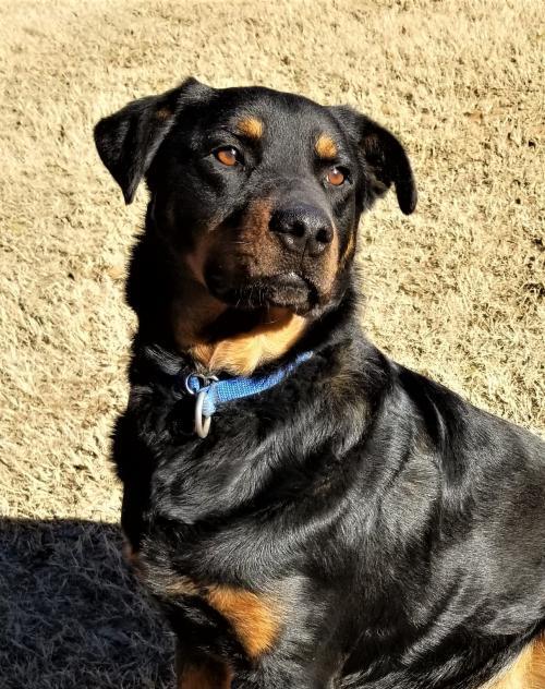 Dog For Adoption Granger Near Edmond Ok Petfinder