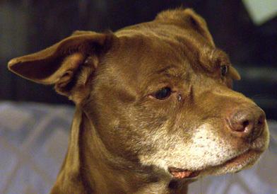 Photo of Humane Society of the Piedmont - Greensboro, NC, United States