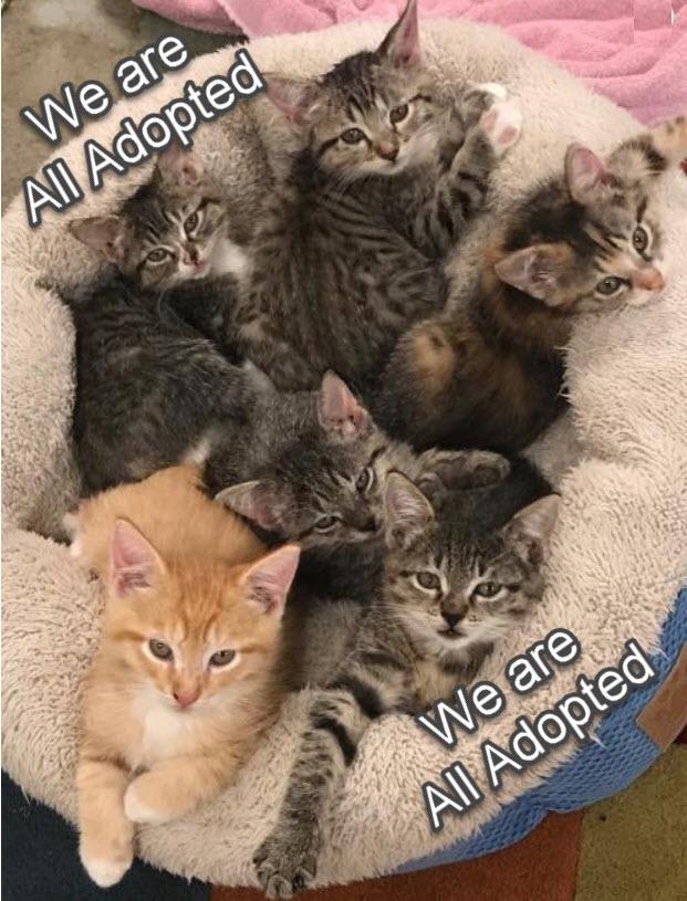 Kittens! Kittens!