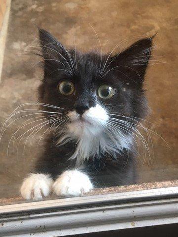 Kittens! Kittens! 2