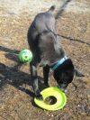 Shepherd Dog: Benny