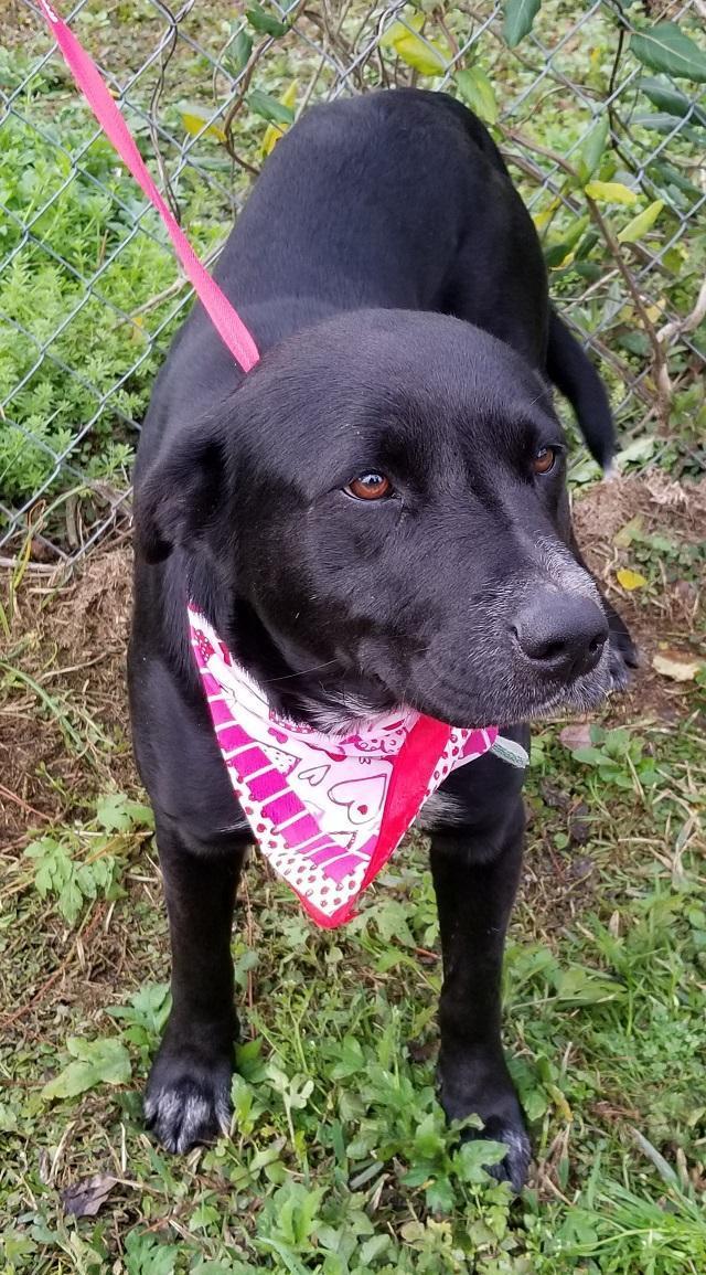 Maggie- loving and loyal companion