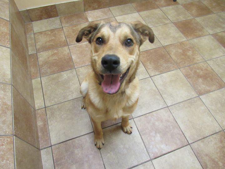 TJ *Petsmart GB*, an adopted Shepherd Mix in Appleton, WI