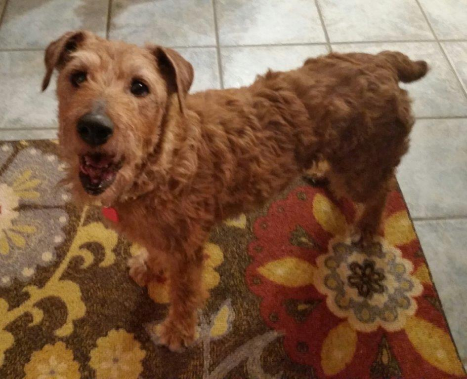Dog for Adoption – LOGAN, near Dumont, IA | Petfinder
