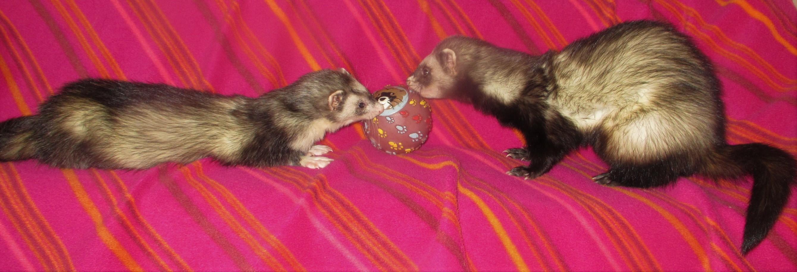 Oliver & Fiona