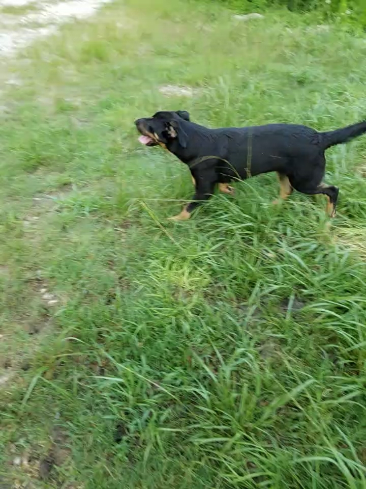 Nellie 3