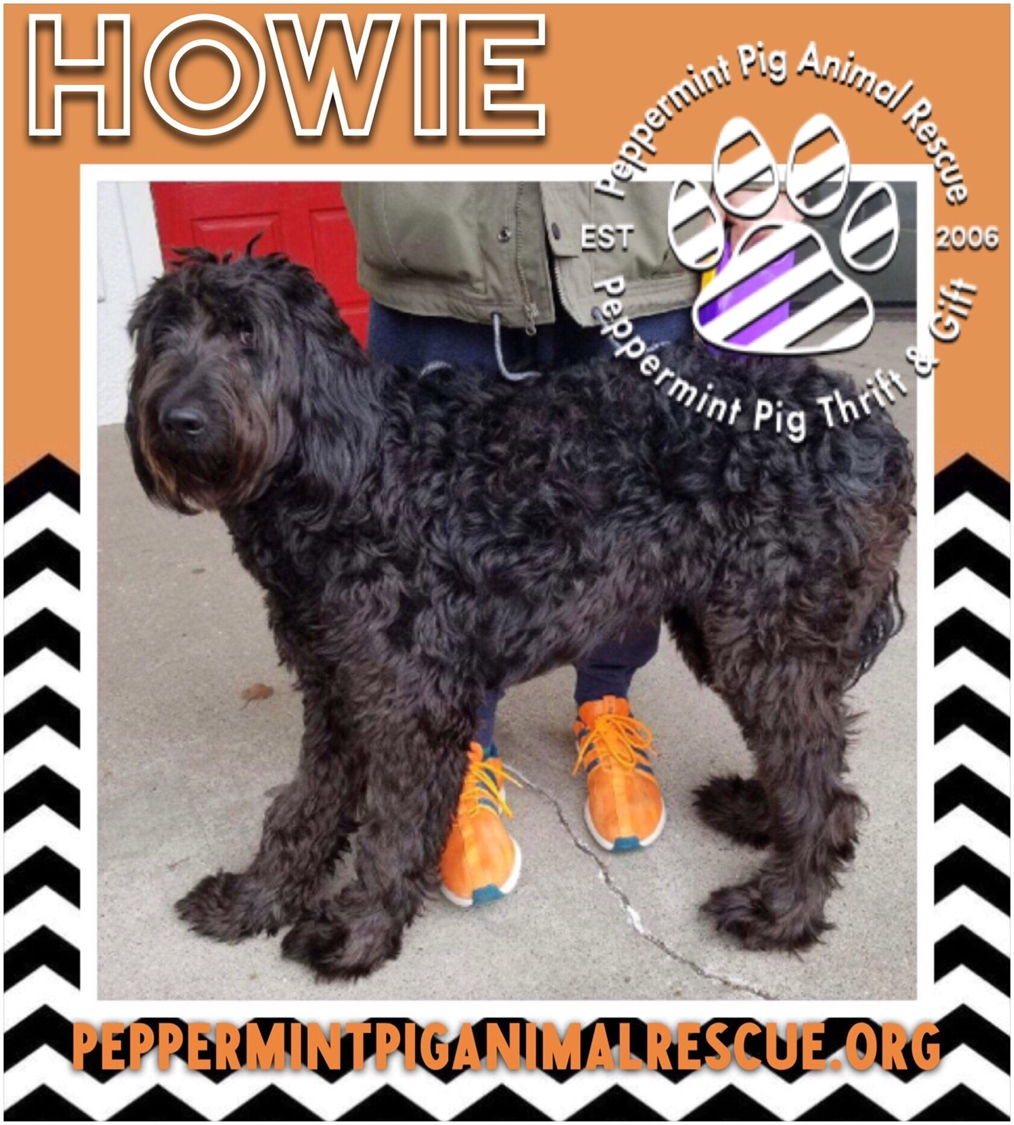 Howie ADOPTION PENDING