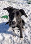 Shepherd Dog: James - Currently in Training @ Fun Fur Pets