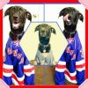Labrador Retriever Dog: Raylan