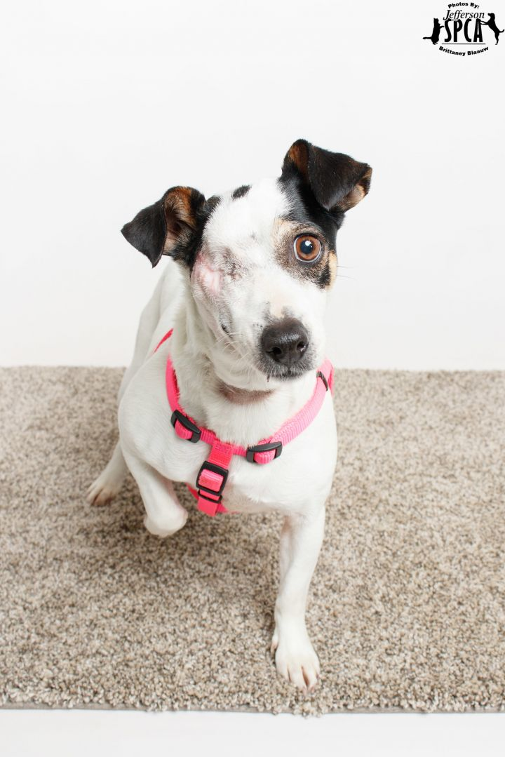 Leela in a foster home - *Featured on PUP News!* 1