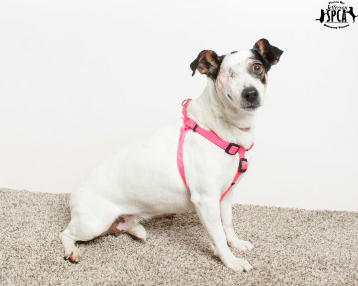 Leela in a foster home - *Featured on PUP News!* 6