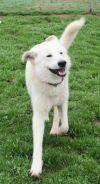 German Shepherd Dog Dog: Damon