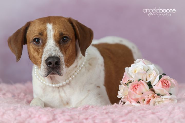 Ellie - $20.18 Adoption Fee in September! - no longer accepting applications 3