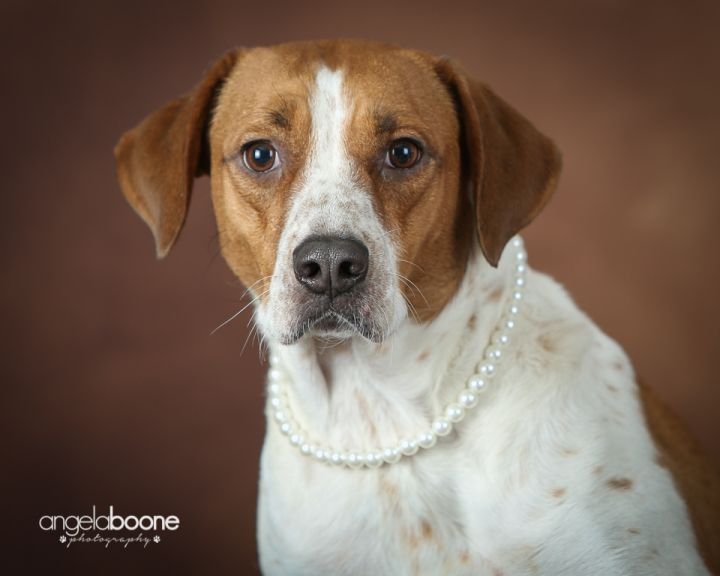 Ellie - $20.18 Adoption Fee in September! - no longer accepting applications 1