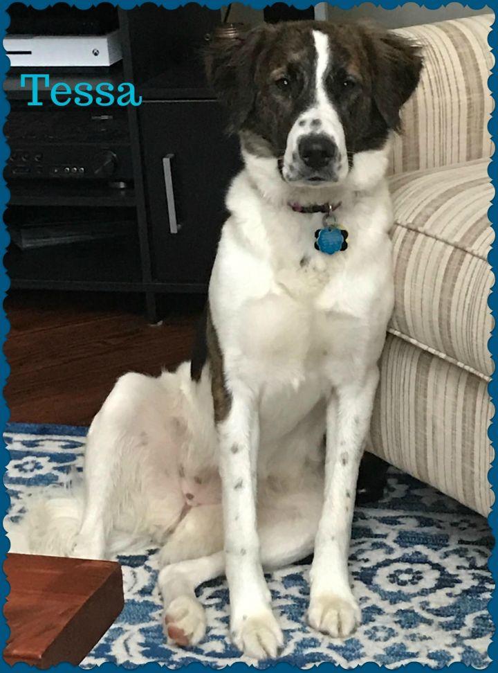Tessa 2
