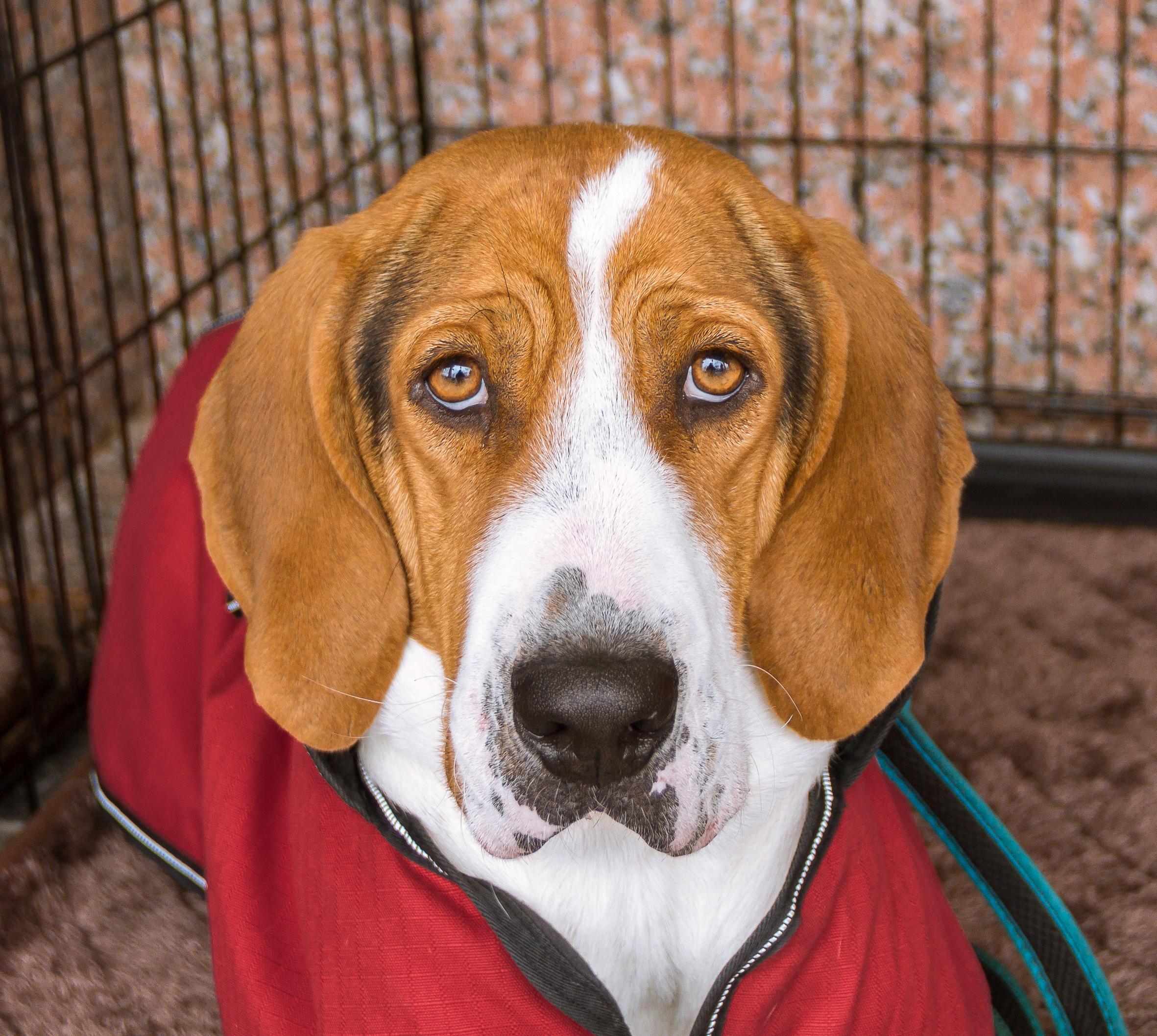Dog for adoption ricky bobby near richmond va petfinder ricky bobby solutioingenieria Images