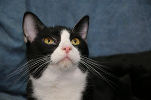 Joker was born April 2015 and is very bonded to Eye Girl We are looking for a home for them