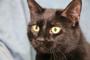 Ebony came to us from a hoarding situation in New Jersey along with her sister