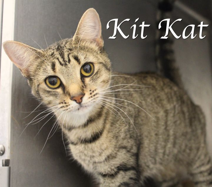 Kit Kat 2